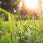 4 conseils pour nettoyer le foie printemps